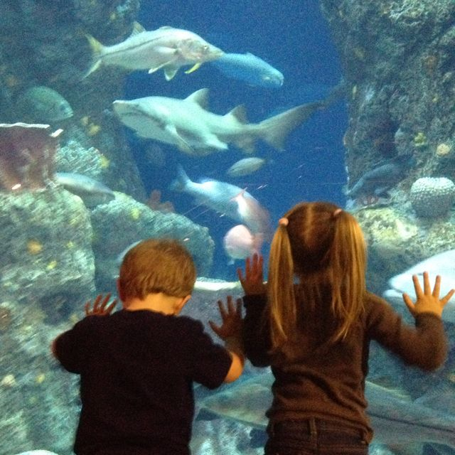 Charleston Sc Aquarium Things To Do Pinterest