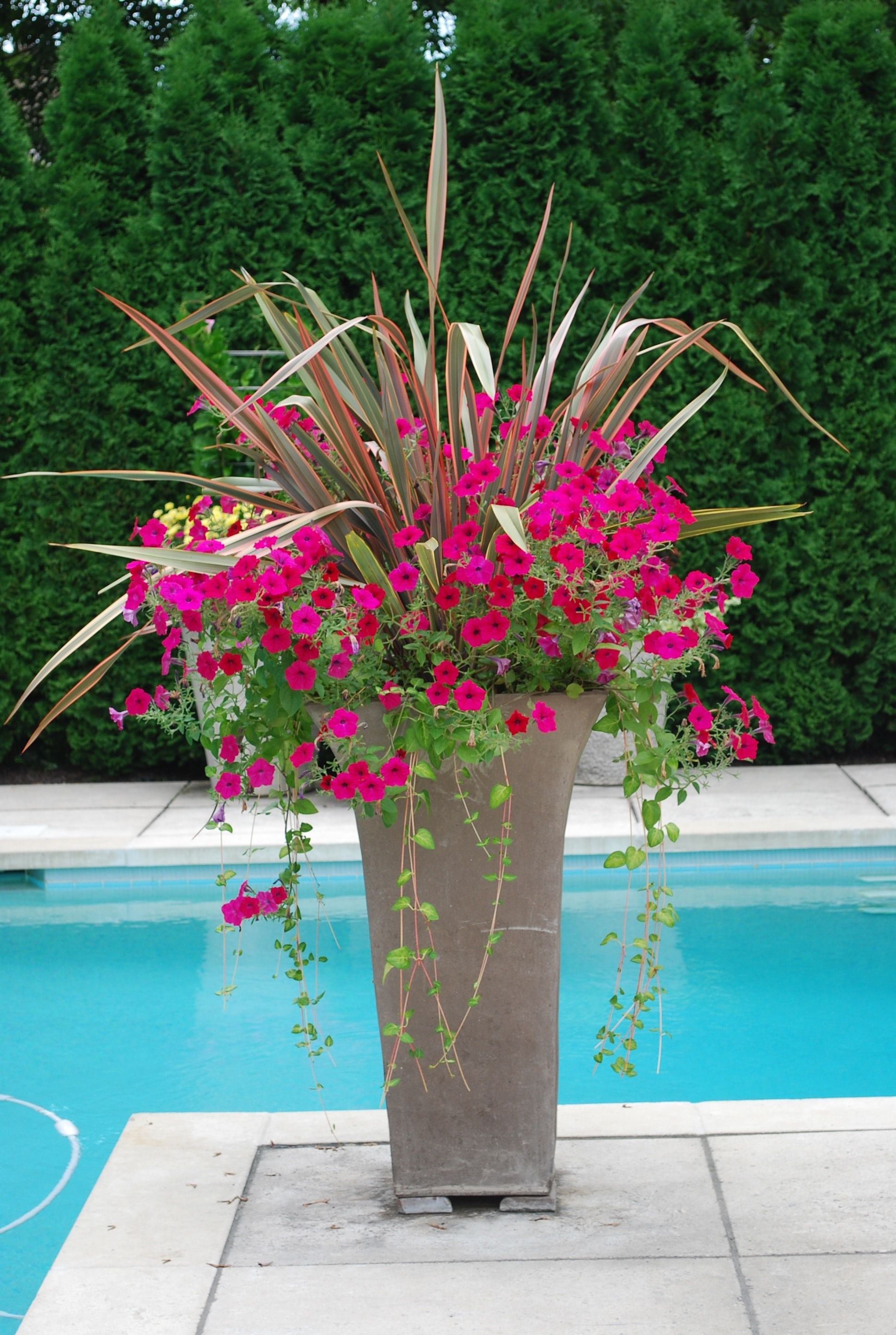 Poolside planter container gardens pinterest for Outdoor planter ideas