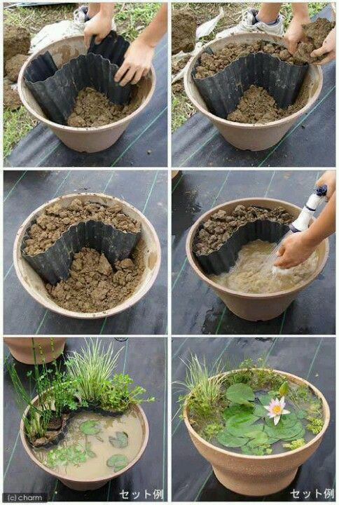 Pond-in-a-pot