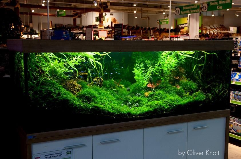 Incredible! AWESOME AQUASCAPES Pinterest