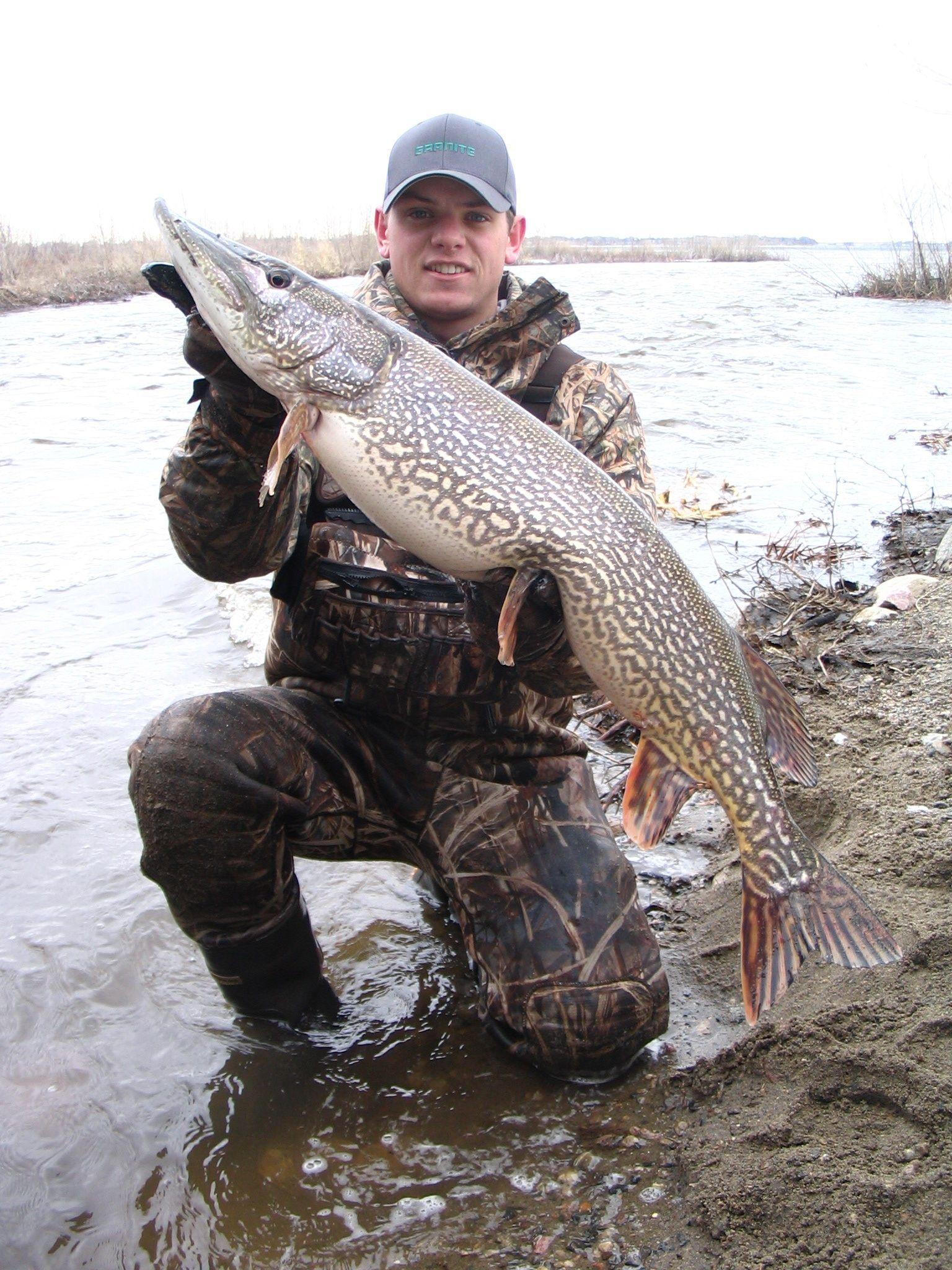The gallery for dakota pike for South dakota fishing