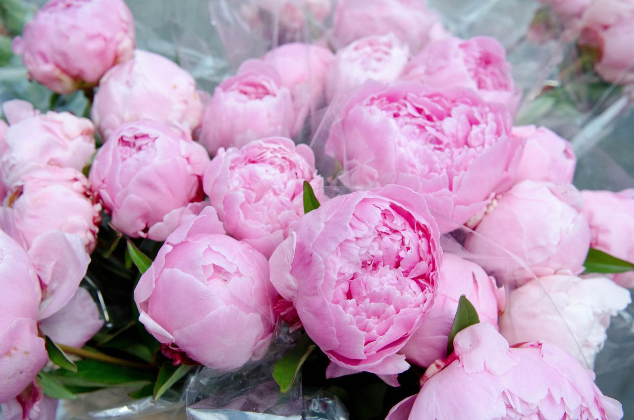 Pink Peonies | tickled pink | Pinterest