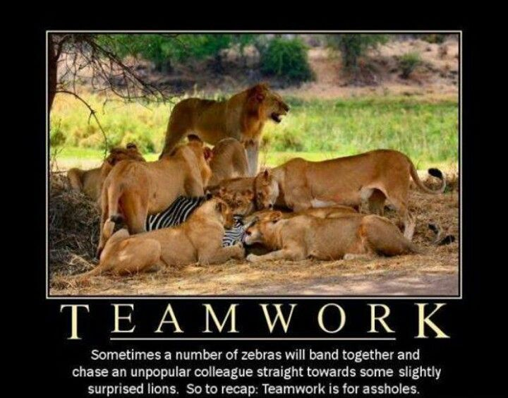 teamwork in