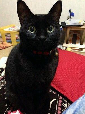 黒猫の画像 p1_2