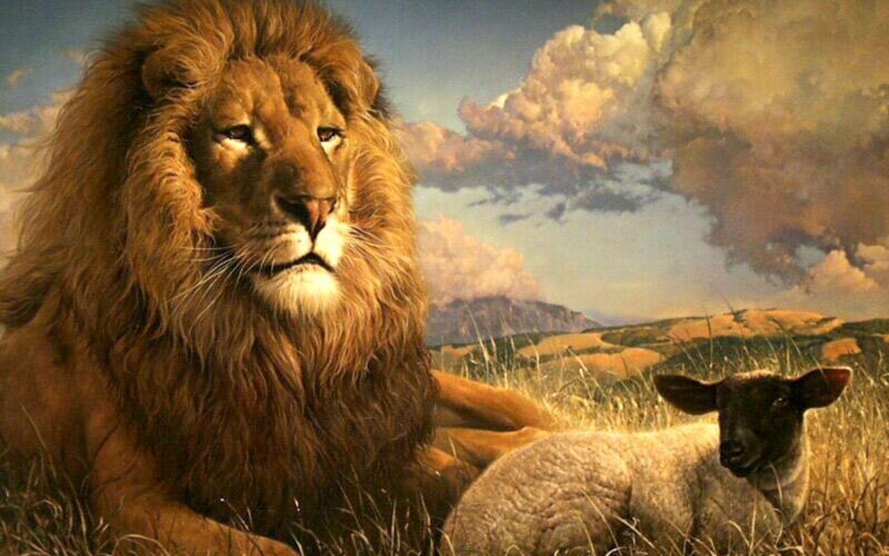 Christian The Lion Wallpaper