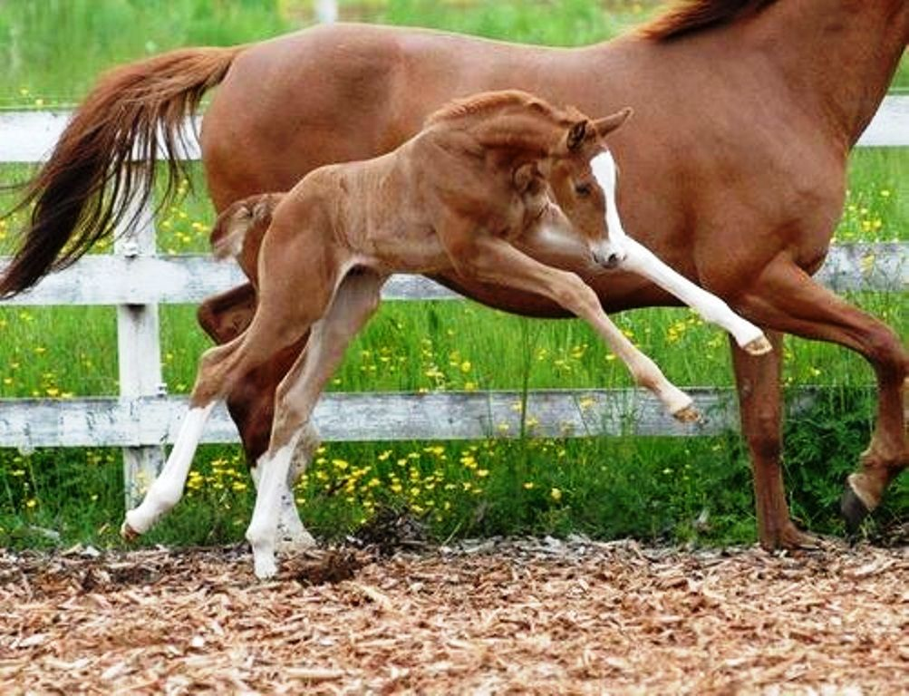 Foal playing with Mom | Foals | Pinterest