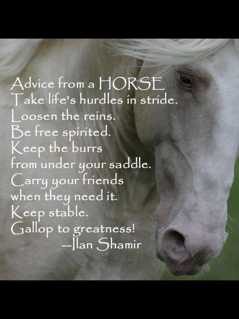 Spirit Horse Quotes Quotesgram