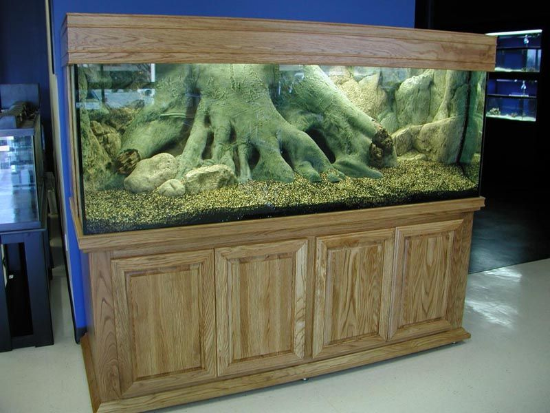 Pin by Jennifer Steuerwald on Aquariums and Fish Pinterest