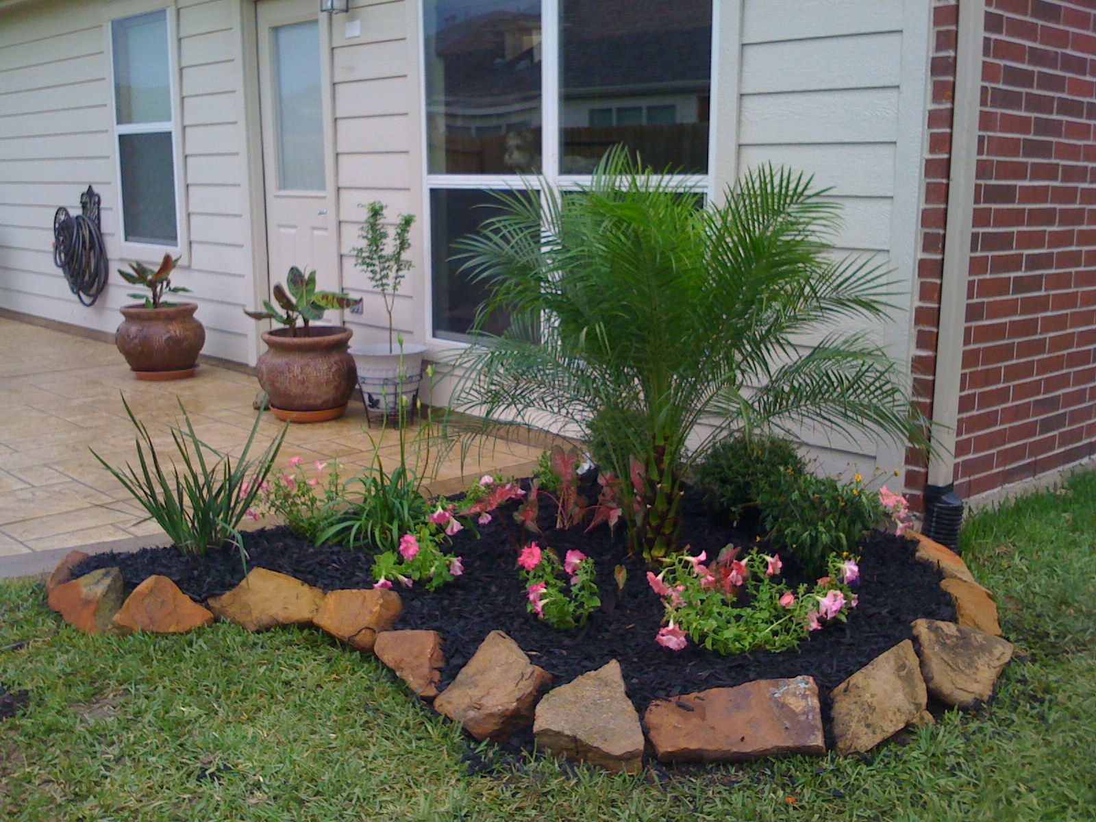 Flower bed texas gardening pinterest for Flowers for flower beds