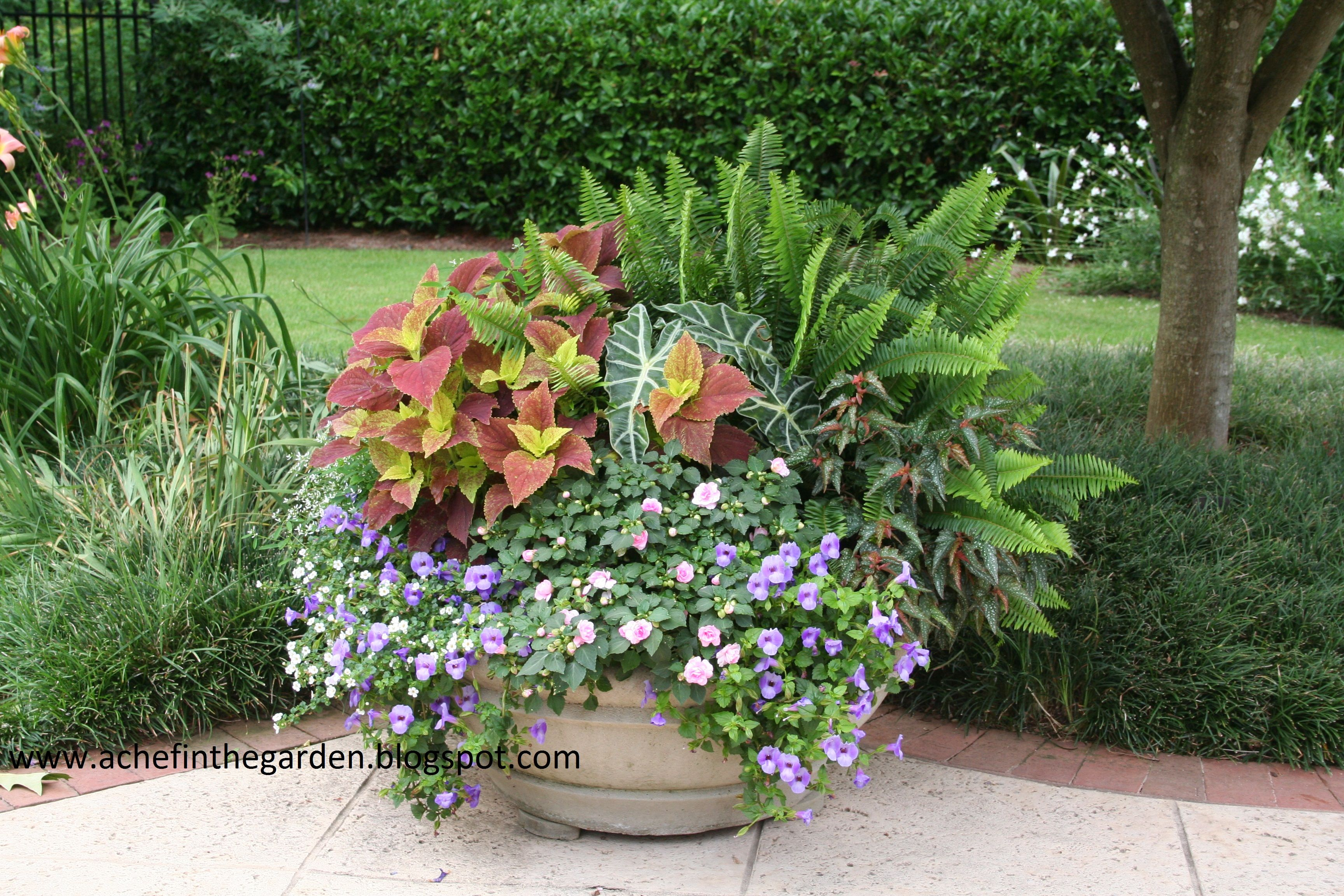 Shade container the great outdoors pinterest - Container gardens for shade ...