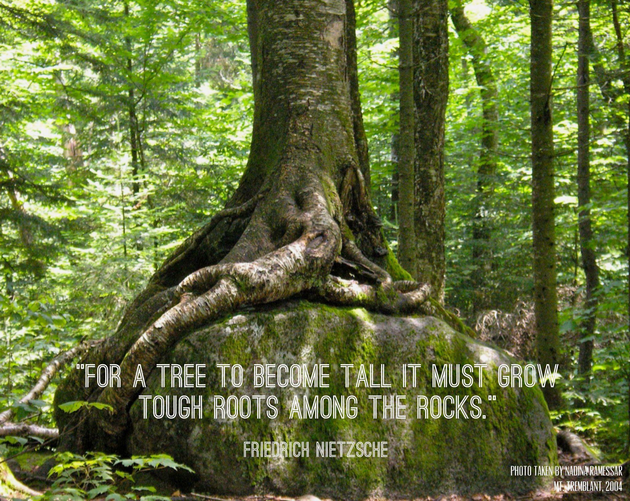 Inspiration Tree Quotes. QuotesGram