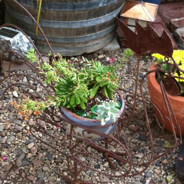 Rooster succulent container Succulent Garden Ideas