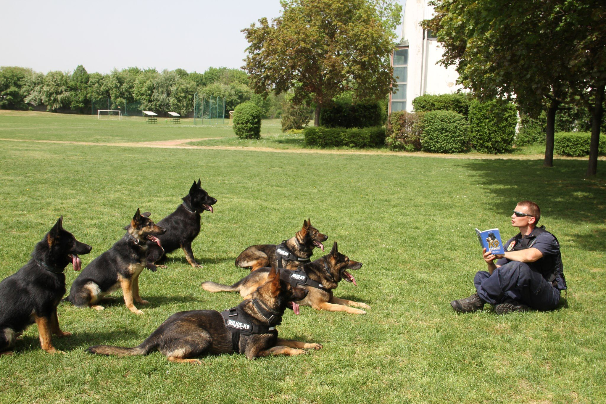 Dog Training Schools For Service Dogs