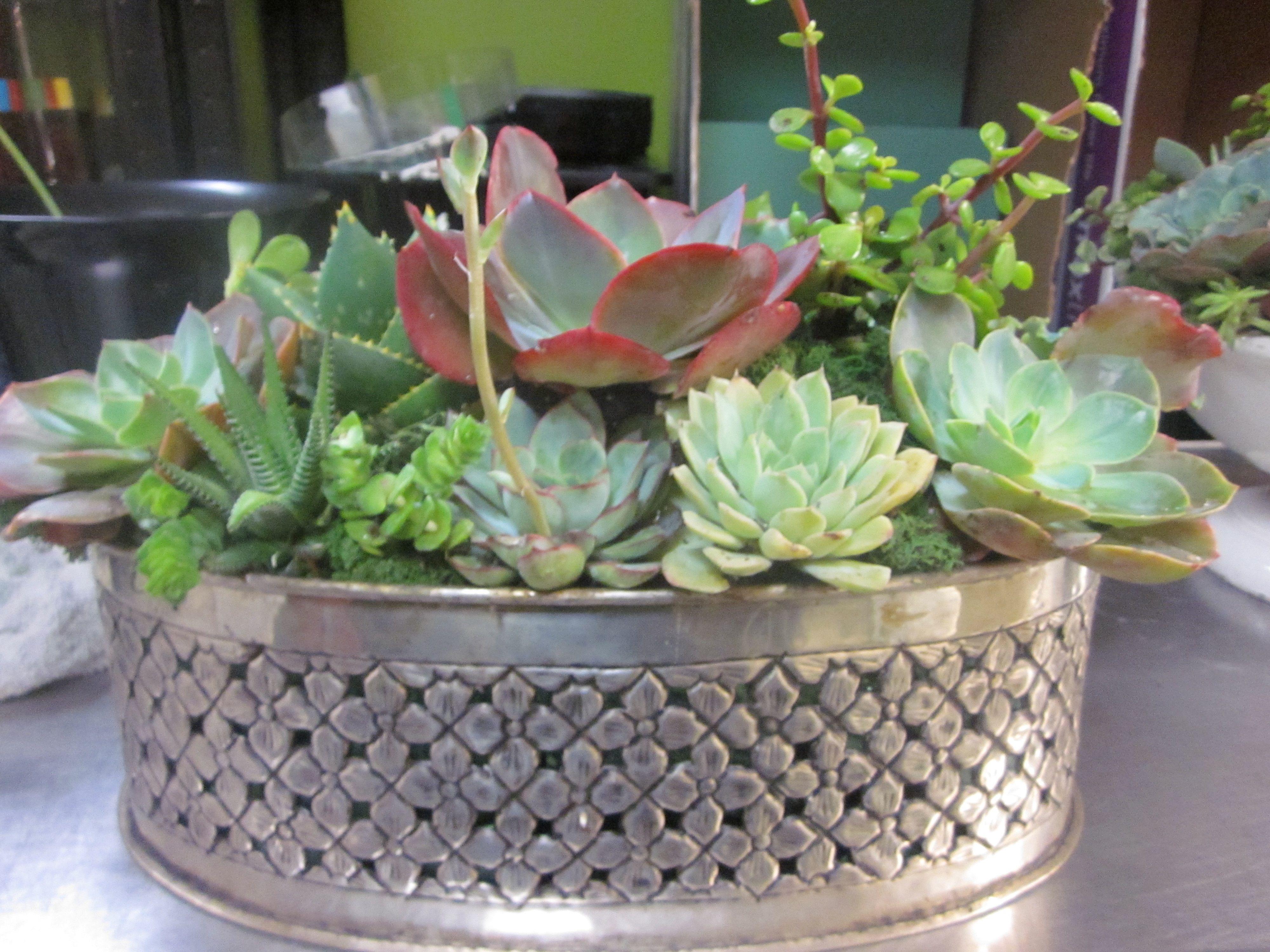 succulent container garden Pinterest