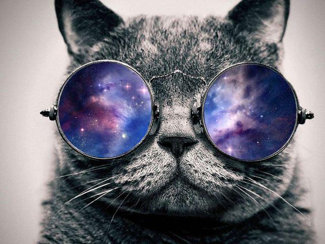 обои на рабочий стол космос коты № 2288035 бесплатно