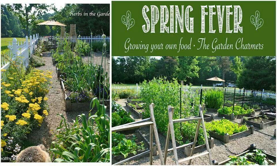 grow your own garden diy backyard projects pinterest