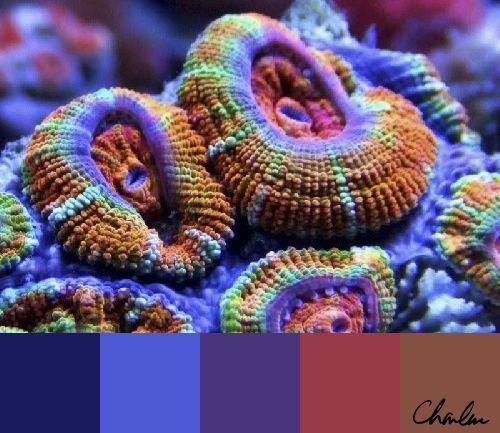 Uranium series dating corals betting