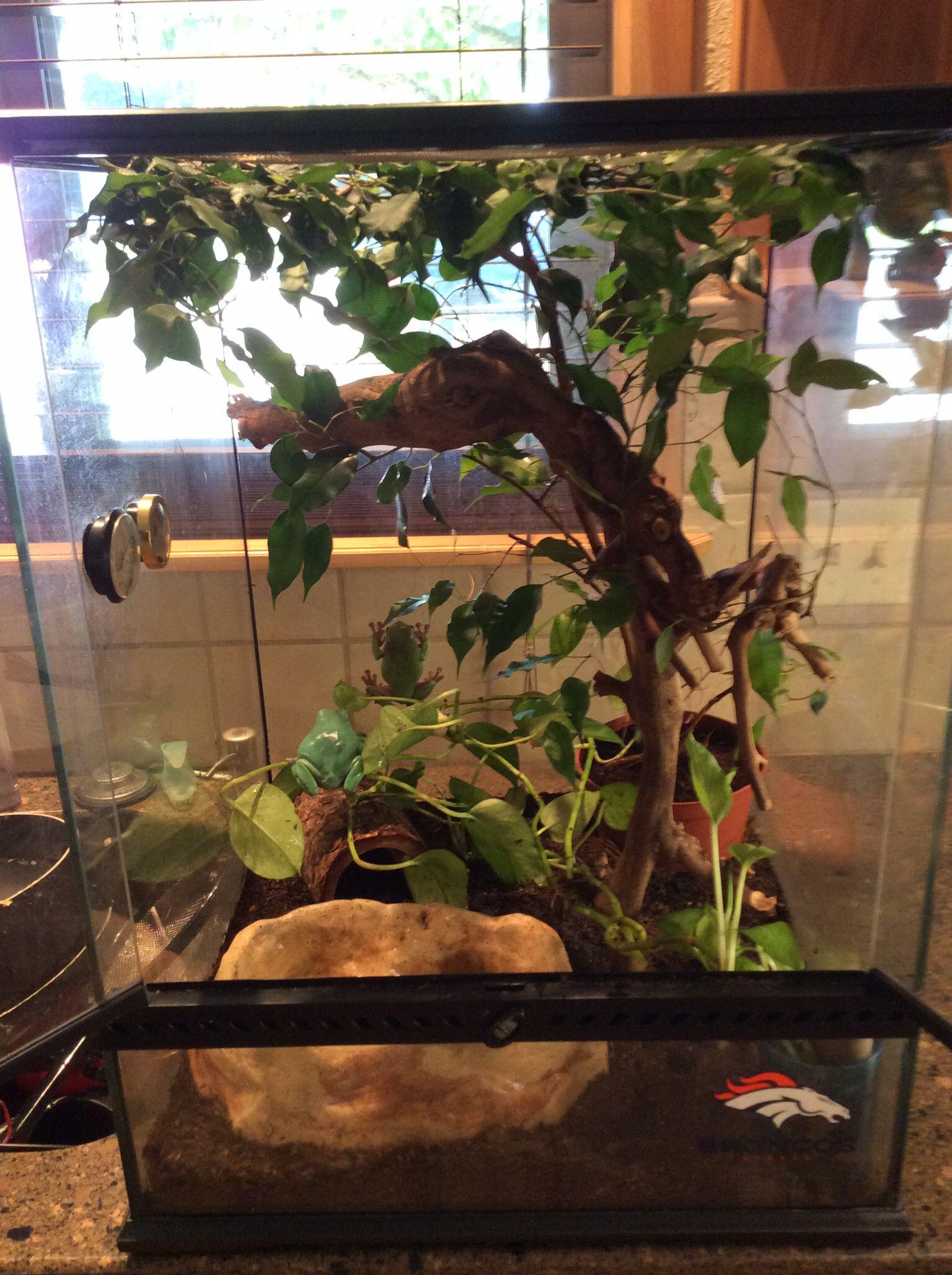 Террариум для наземных лягушек и жаб, размеры террариума 2
