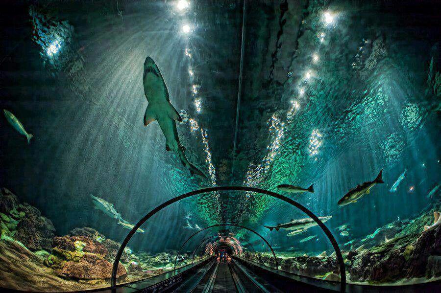 Shark exhibit seaworld orlando fl | Travel | Pinterest