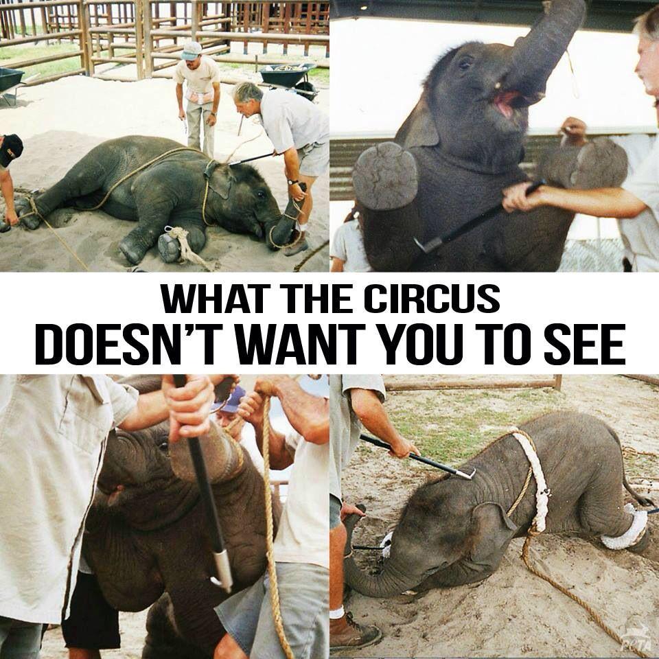 Circus animal abuse articles - photo#1