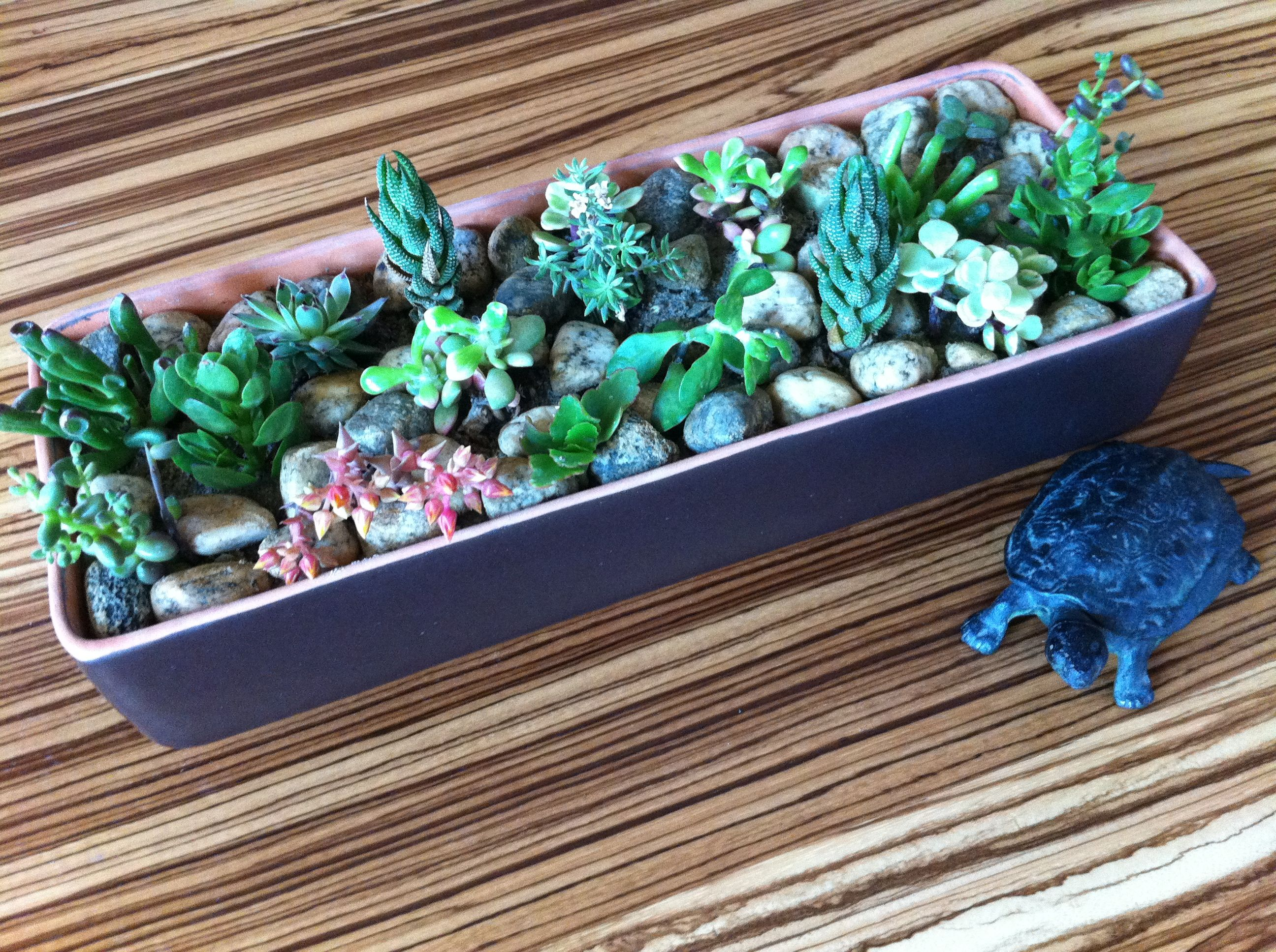 indoor succulent garden for the home pinterest