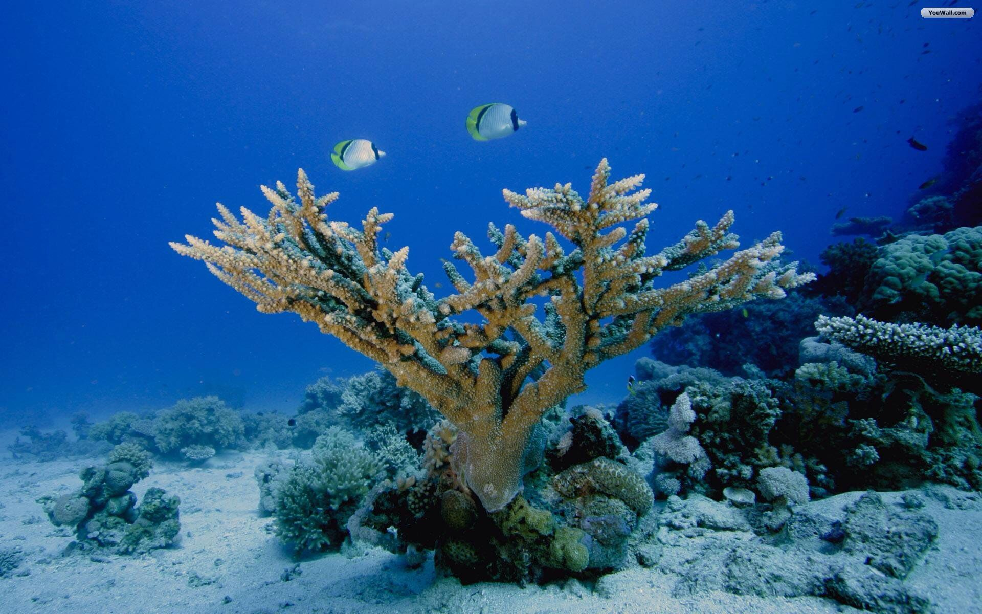 Under the sea coral reef fish coral reef protectors for Fish under the sea