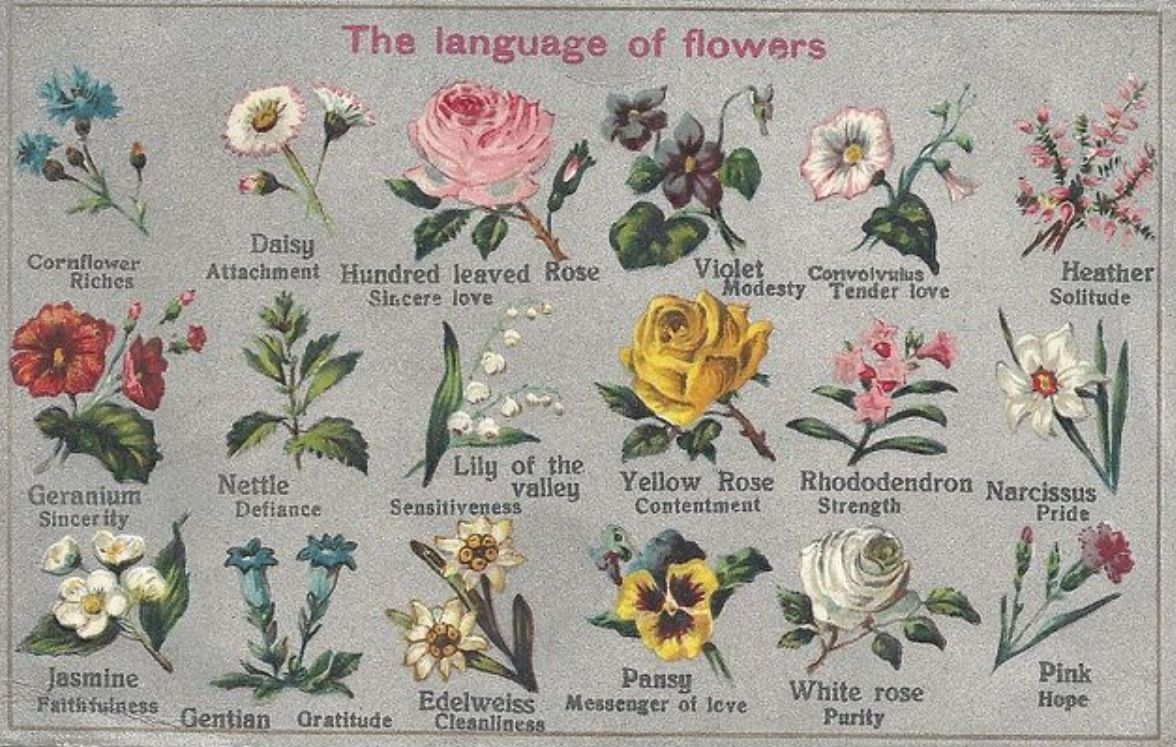 blog language flowers meanings