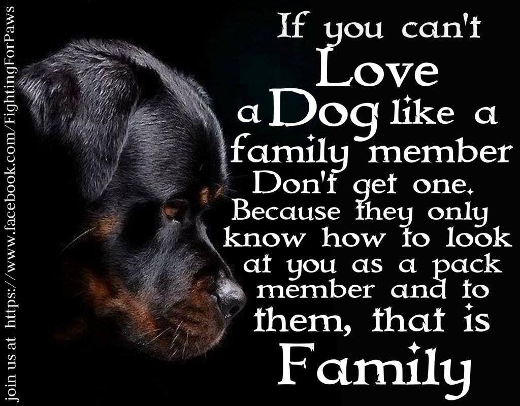 Happy Humans Dog Quotes. QuotesGram