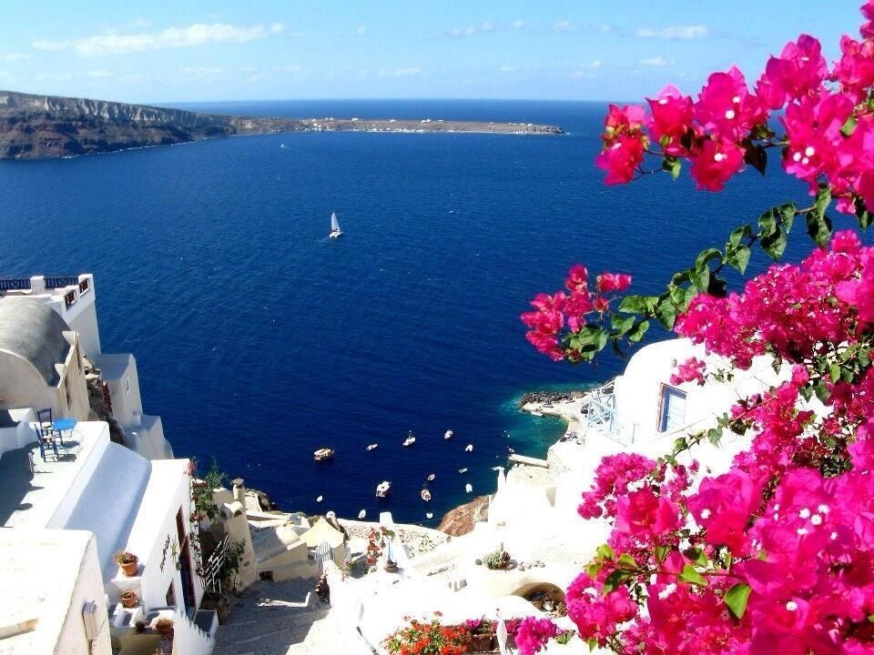Santorini greece beautiful landscapes places pinterest - Flowers native to greece a sea of color ...