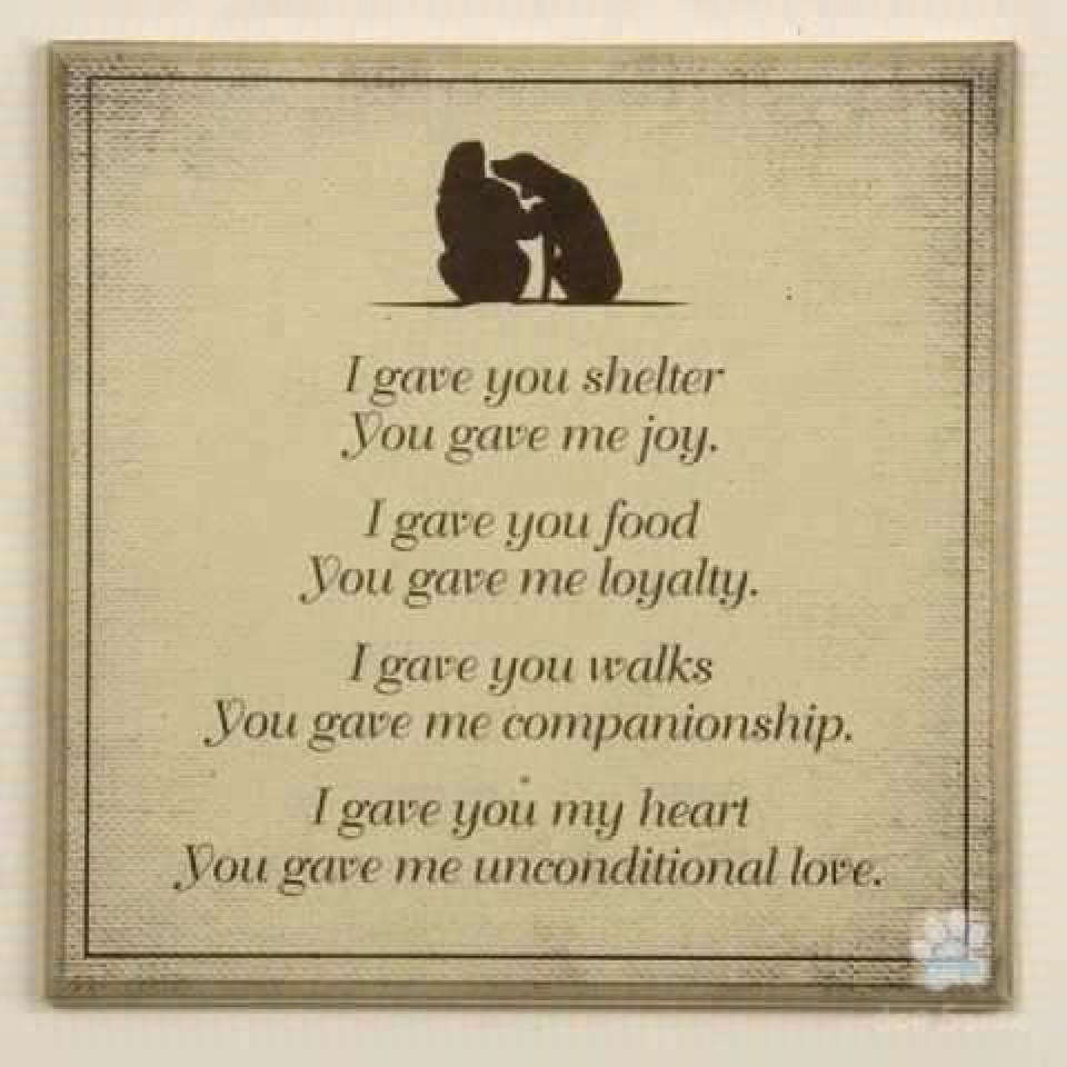 Quotes Unconditional Love Unconditional Love Quotes For Pets Dog Unconditional Love Quotes