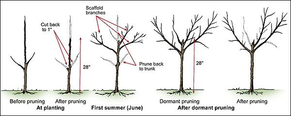 Communication on this topic: How to Prune Old Apple Trees, how-to-prune-old-apple-trees/