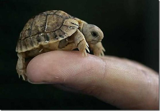 Baby turtle Animals, pets and butterflies, and insects Pinterest