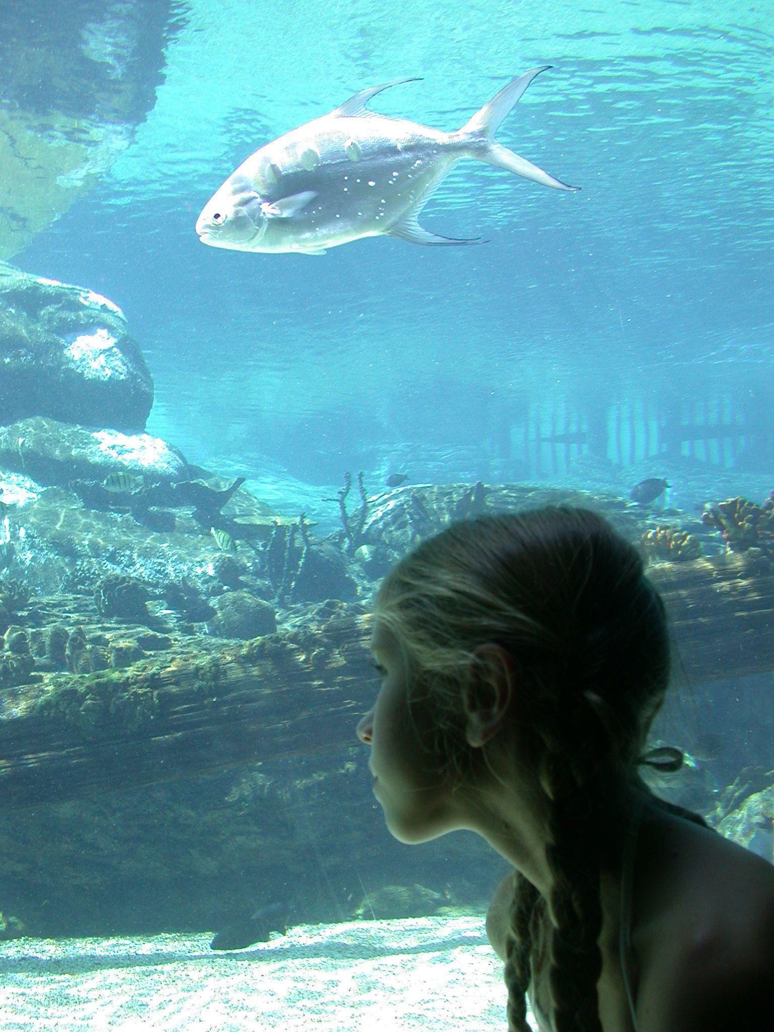 uShaka Marine World, Durban south africa Pinterest
