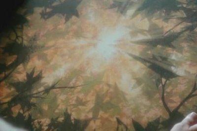 Ultimum Folium-The Last Leaf