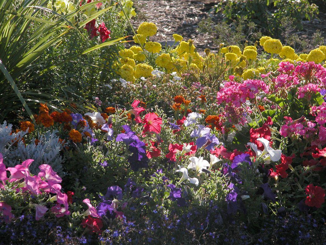 september flowers anyway pinterest
