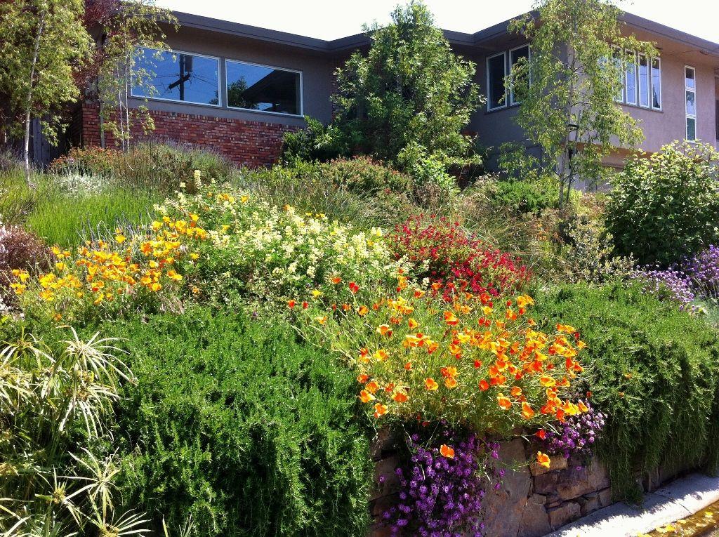 Pin by mariposa gardening design llc on pollinator for Garden design llc
