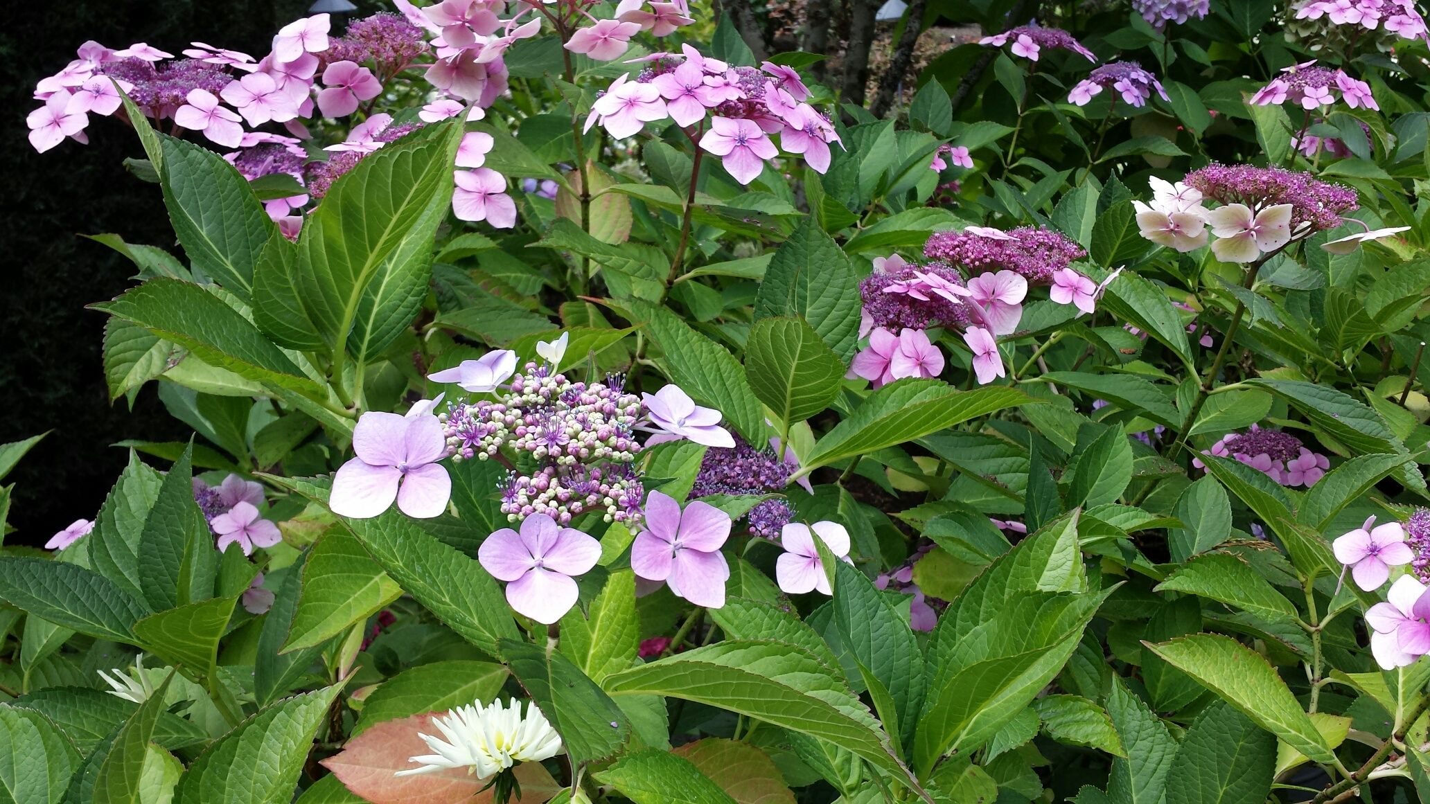 flowers victoria canada