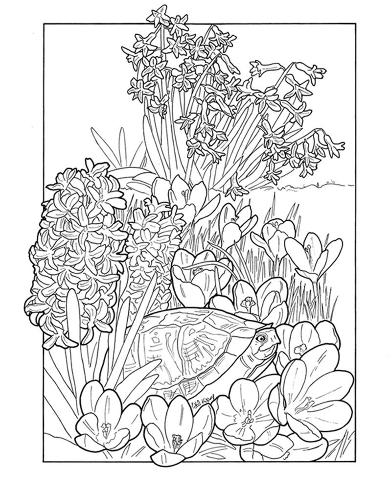 Flowers and turtle Coloring pages