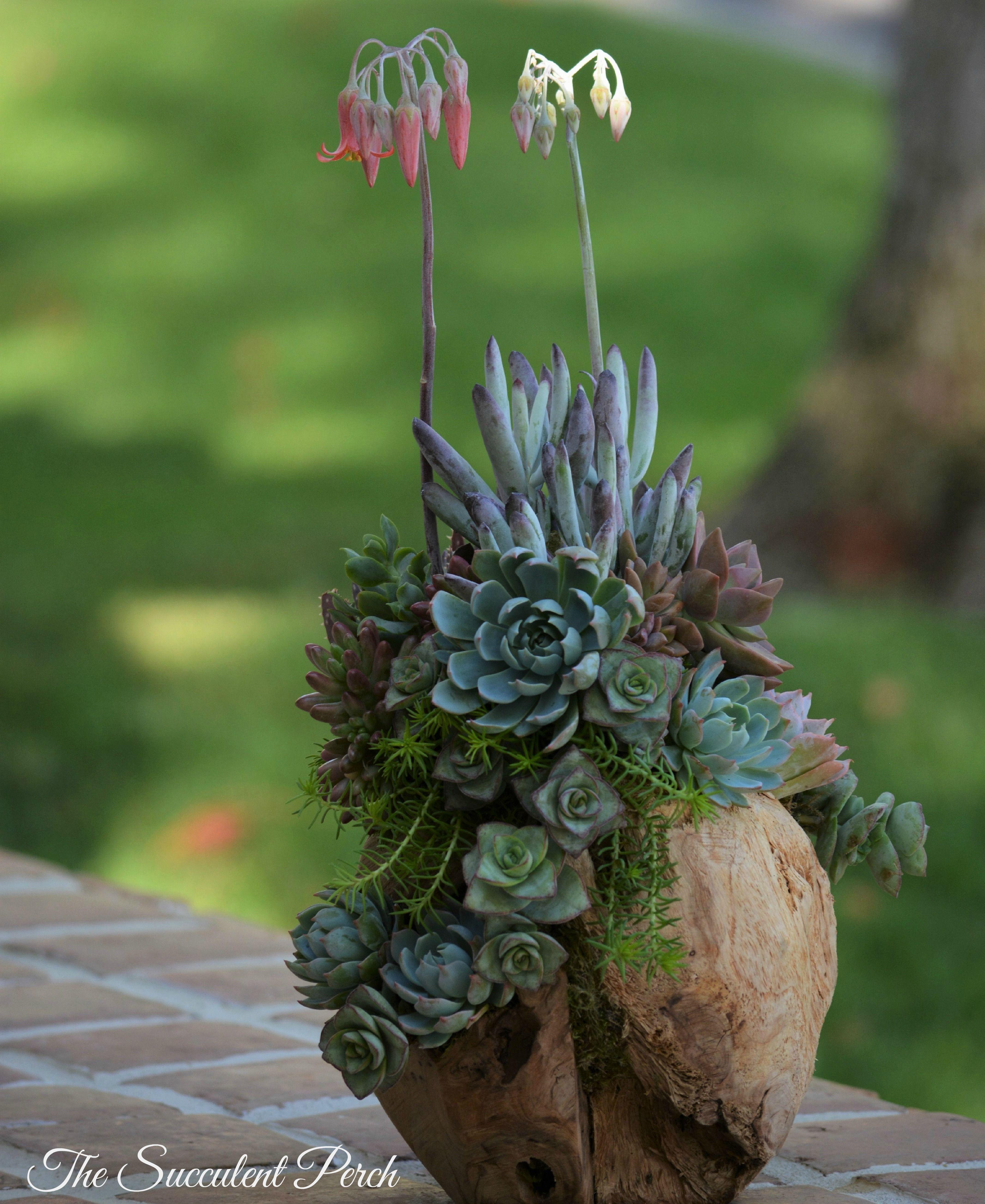 1000 images about succulent plants planter ideas on for Wooden cactus planter