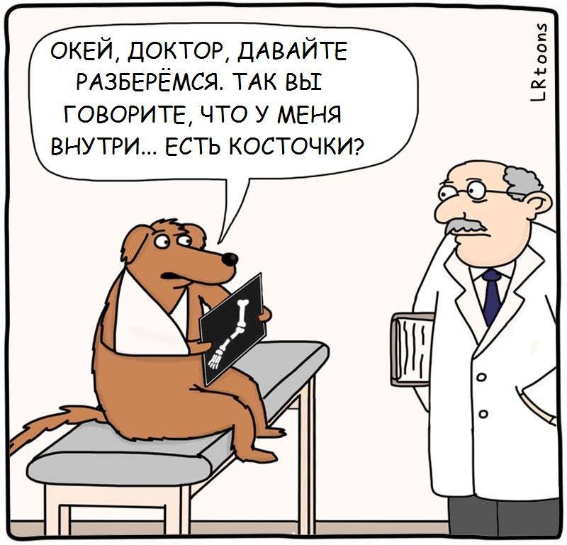 Анекдоты Про Ветеринаров
