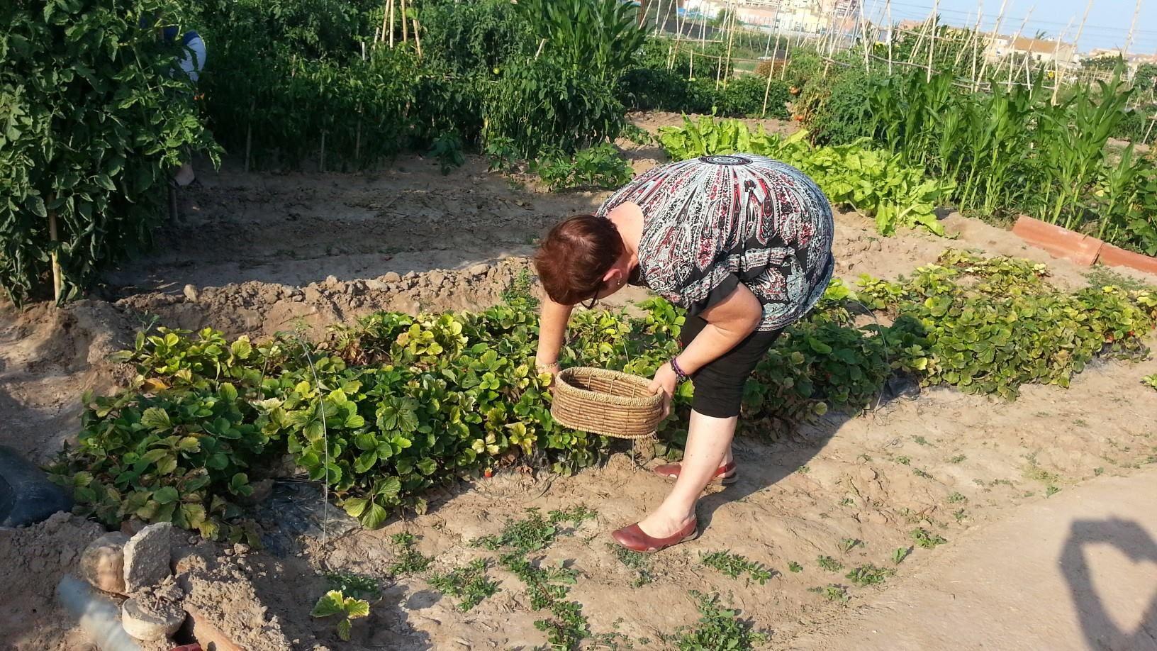 recoleccion-de-fresas