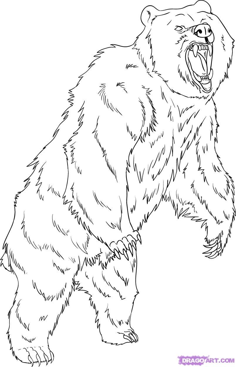 Grizzly Bear Coloring Pages How To Draw A Grizzly Bear Step By Step Forest Animals Animals