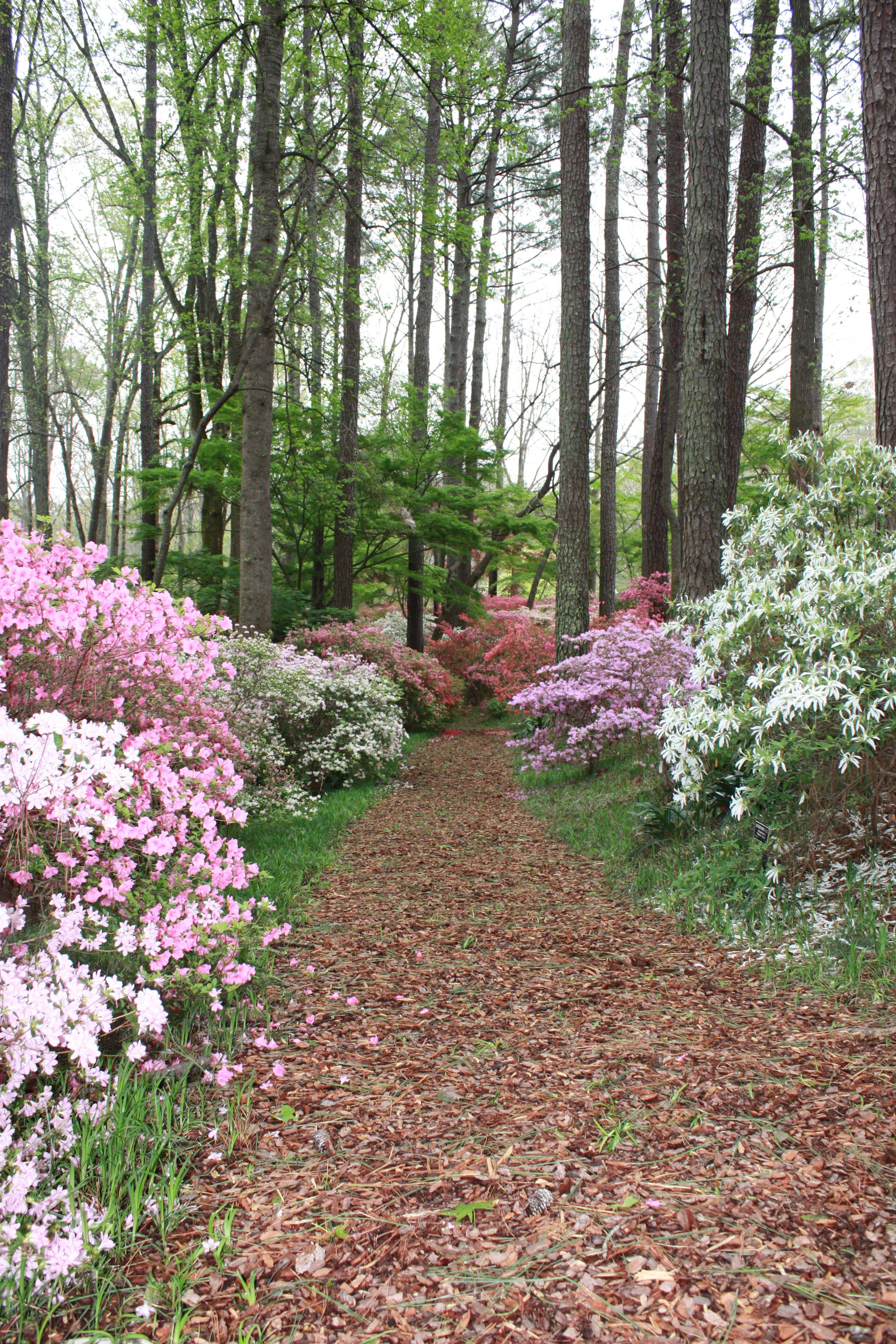 Callaway gardens pine mountain georgia down the path - Callaway gardens pine mountain georgia ...