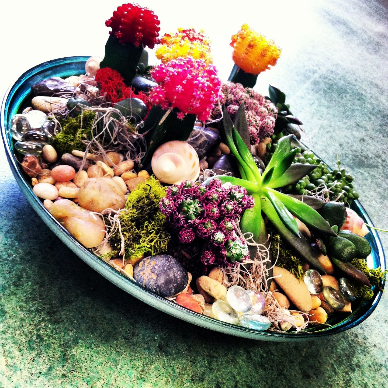 Succulent and cacti dish garden Garden Pinterest