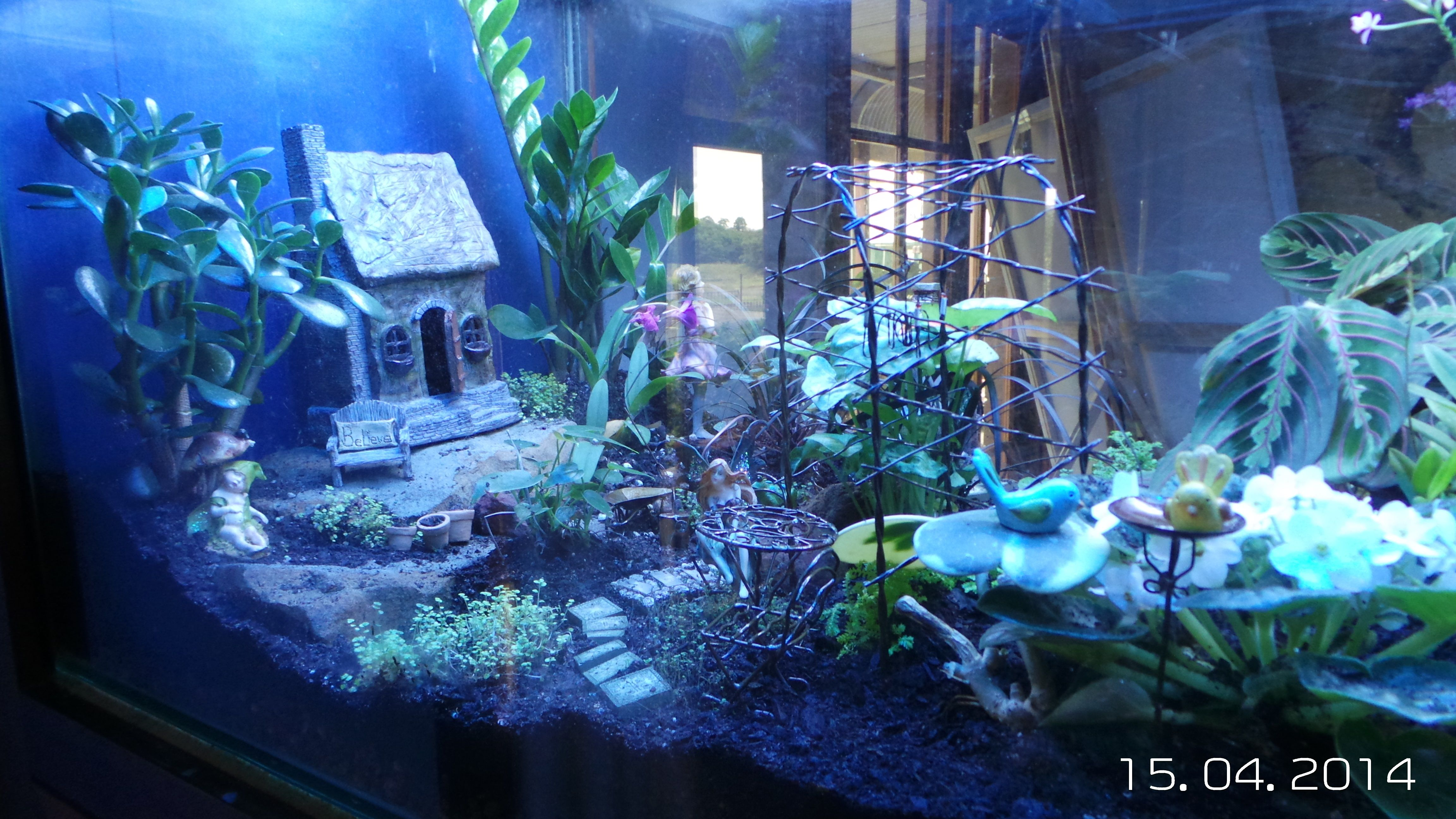 Indoor fairy garden ideas photograph indoor fairy gardens for Indoor garden design ideas
