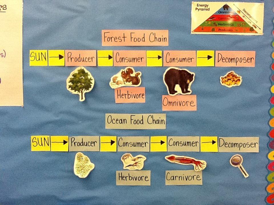 foodchain | 4th Grade | Pinterest