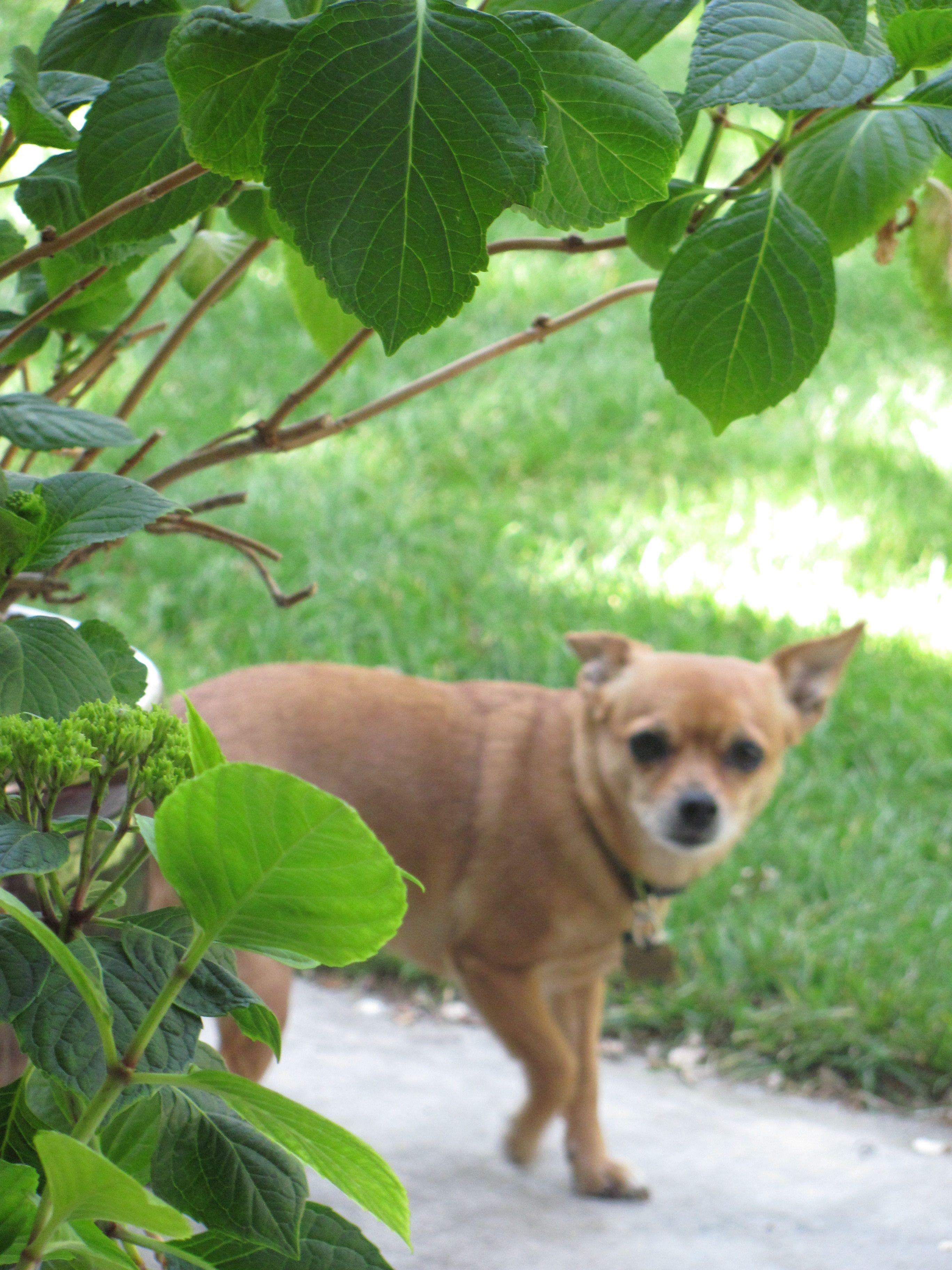 Garden watch dog garden pinterest - Gardening for pets ...