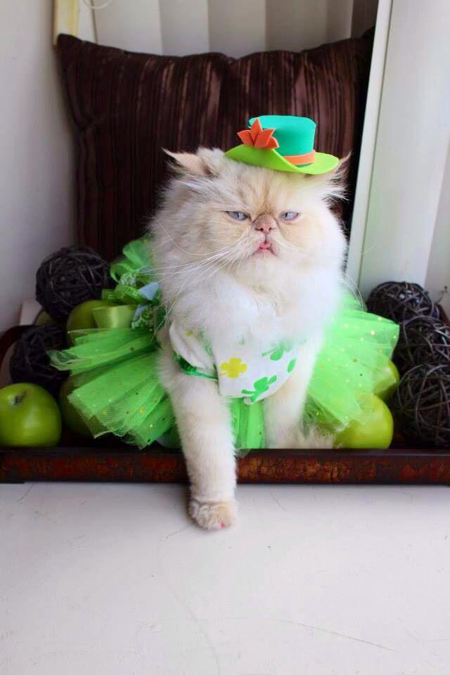 Cat Skirt 41