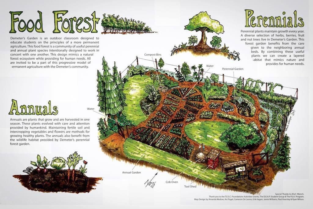 Food Forest  Creative Gardening Ideas  Pinterest