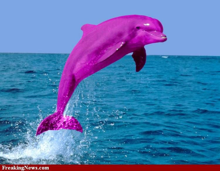 Почему выпрыгивают дельфины из воды